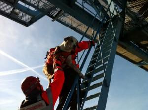 Mit Indigo auf dem Rücken klettere ich die Steilleiter eines Hafenkrans hoch. Von oben werden wir dann abgeseilt. Das war neben der eigenlichen Sucharbeit ein Teil unserer Prüfung.